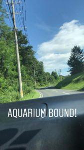 Aquarium Drive
